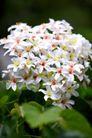 白色纯净花0052,白色纯净花,自然风景,