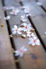 白色纯净花0053,白色纯净花,自然风景,