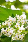 白色纯净花0054,白色纯净花,自然风景,