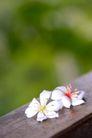 白色纯净花0055,白色纯净花,自然风景,