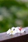 白色纯净花0058,白色纯净花,自然风景,