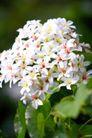 白色纯净花0063,白色纯净花,自然风景,