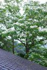 白色纯净花0065,白色纯净花,自然风景,