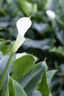 白色纯净花0067,白色纯净花,自然风景,