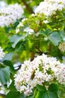 白色纯净花0069,白色纯净花,自然风景,