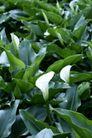 白色纯净花0072,白色纯净花,自然风景,
