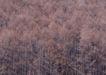 竹树婆娑0203,竹树婆娑,自然风景,