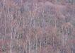 竹树婆娑0204,竹树婆娑,自然风景,