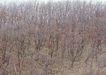 竹树婆娑0208,竹树婆娑,自然风景,