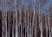 竹树婆娑0210,竹树婆娑,自然风景,