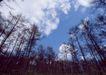 竹树婆娑0213,竹树婆娑,自然风景,
