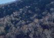 竹树婆娑0216,竹树婆娑,自然风景,
