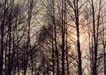 竹树婆娑0218,竹树婆娑,自然风景,