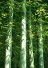竹树婆娑0221,竹树婆娑,自然风景,