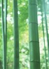 竹树婆娑0223,竹树婆娑,自然风景,