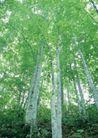 竹树婆娑0225,竹树婆娑,自然风景,树杆 绿树 春景