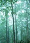 竹树婆娑0226,竹树婆娑,自然风景,树林 木材
