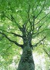 竹树婆娑0231,竹树婆娑,自然风景,