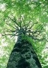 竹树婆娑0232,竹树婆娑,自然风景,