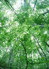 竹树婆娑0238,竹树婆娑,自然风景,