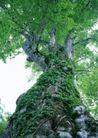 竹树婆娑0240,竹树婆娑,自然风景,