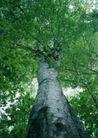 竹树婆娑0241,竹树婆娑,自然风景,