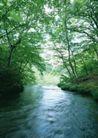 竹树婆娑0242,竹树婆娑,自然风景,