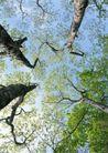 竹树婆娑0243,竹树婆娑,自然风景,