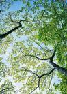 竹树婆娑0244,竹树婆娑,自然风景,