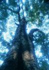 竹树婆娑0245,竹树婆娑,自然风景,