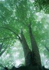 竹树婆娑0246,竹树婆娑,自然风景,
