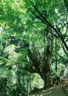 竹树婆娑0247,竹树婆娑,自然风景,