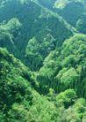竹树婆娑0248,竹树婆娑,自然风景,