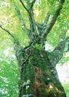 竹树婆娑0249,竹树婆娑,自然风景,