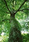 竹树婆娑0250,竹树婆娑,自然风景,