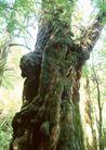 竹树婆娑0252,竹树婆娑,自然风景,