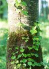 竹树婆娑0254,竹树婆娑,自然风景,