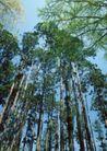 竹树婆娑0255,竹树婆娑,自然风景,