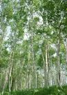 竹树婆娑0256,竹树婆娑,自然风景,