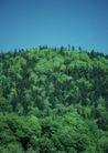 竹树婆娑0257,竹树婆娑,自然风景,