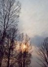 竹树婆娑0258,竹树婆娑,自然风景,