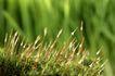 绿叶幼苗0020,绿叶幼苗,自然风景,
