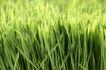 绿叶幼苗0021,绿叶幼苗,自然风景,
