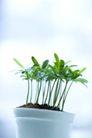 绿叶幼苗0041,绿叶幼苗,自然风景,