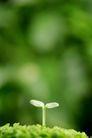 绿叶幼苗0042,绿叶幼苗,自然风景,