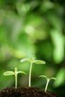 绿叶幼苗0044,绿叶幼苗,自然风景,