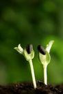 绿叶幼苗0048,绿叶幼苗,自然风景,