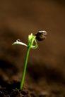 绿叶幼苗0049,绿叶幼苗,自然风景,