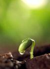 绿叶幼苗0055,绿叶幼苗,自然风景,