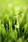 绿叶幼苗0060,绿叶幼苗,自然风景,